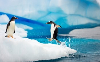 Animal - Penguin Wallpapers and Backgrounds ID : 150368