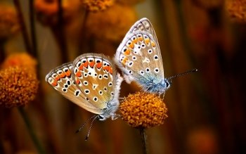 Animal - Butterfly Wallpapers and Backgrounds ID : 150896