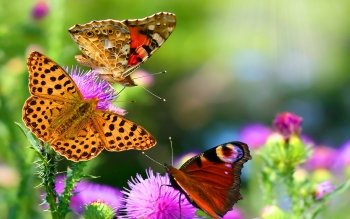 Animal - Butterfly Wallpapers and Backgrounds ID : 153718