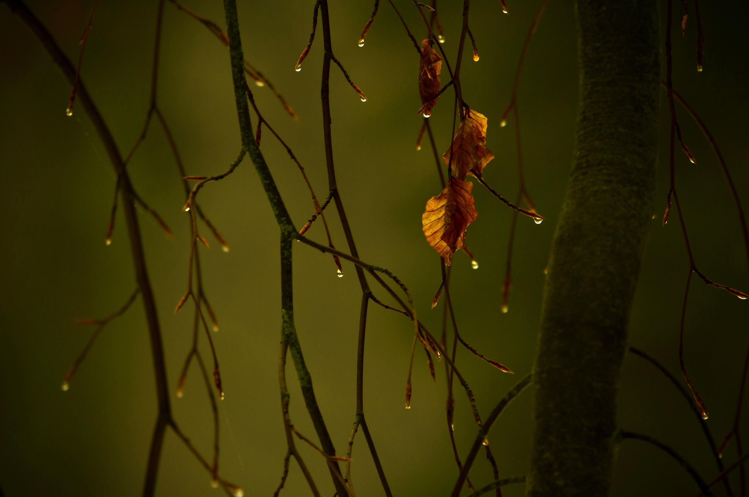 Photography - Rain  Wallpaper
