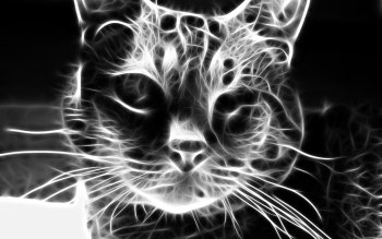 Animal - Cat Wallpapers and Backgrounds ID : 159568