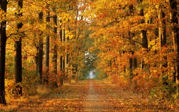 Earth - Autumn Wallpapers and Backgrounds ID : 16086