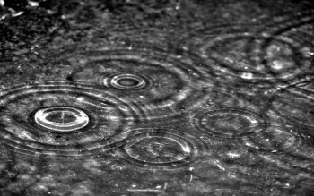 Photography - Rain Wallpapers and Backgrounds ID : 16284