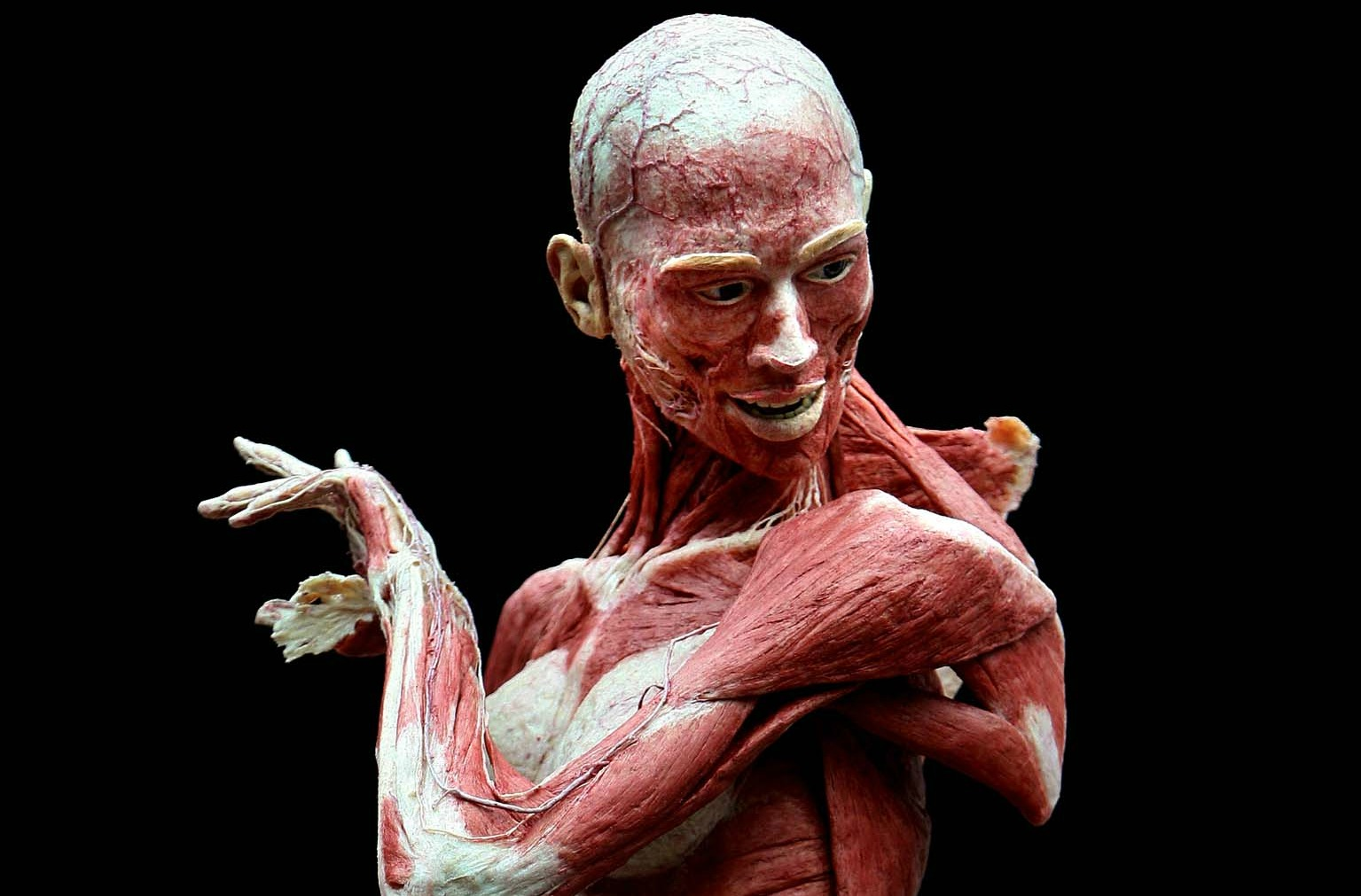 Anatomy Wallpaper and Background Image | 1535x1011 | ID ...