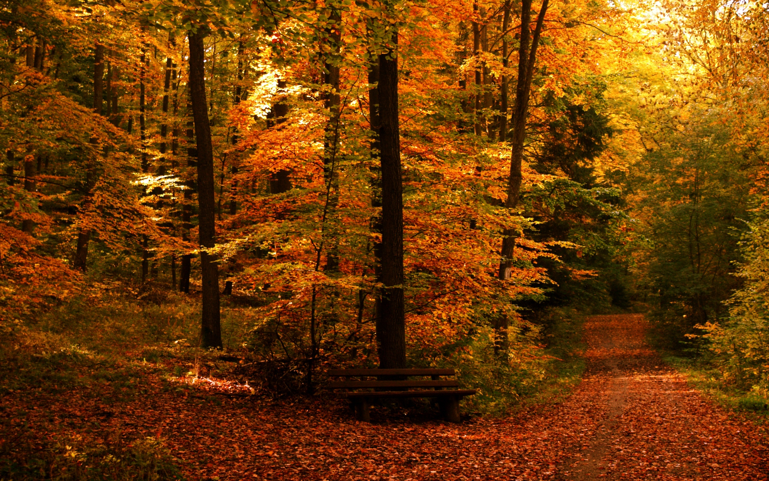 Fall Hd Wallpaper Background Image 2560x1600 Id 165266