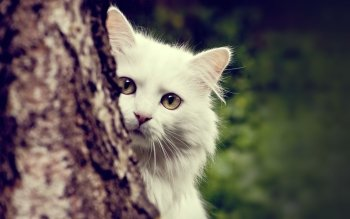 Animal - Cat Wallpapers and Backgrounds ID : 166134