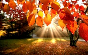 Earth - Autumn Wallpapers and Backgrounds ID : 166584