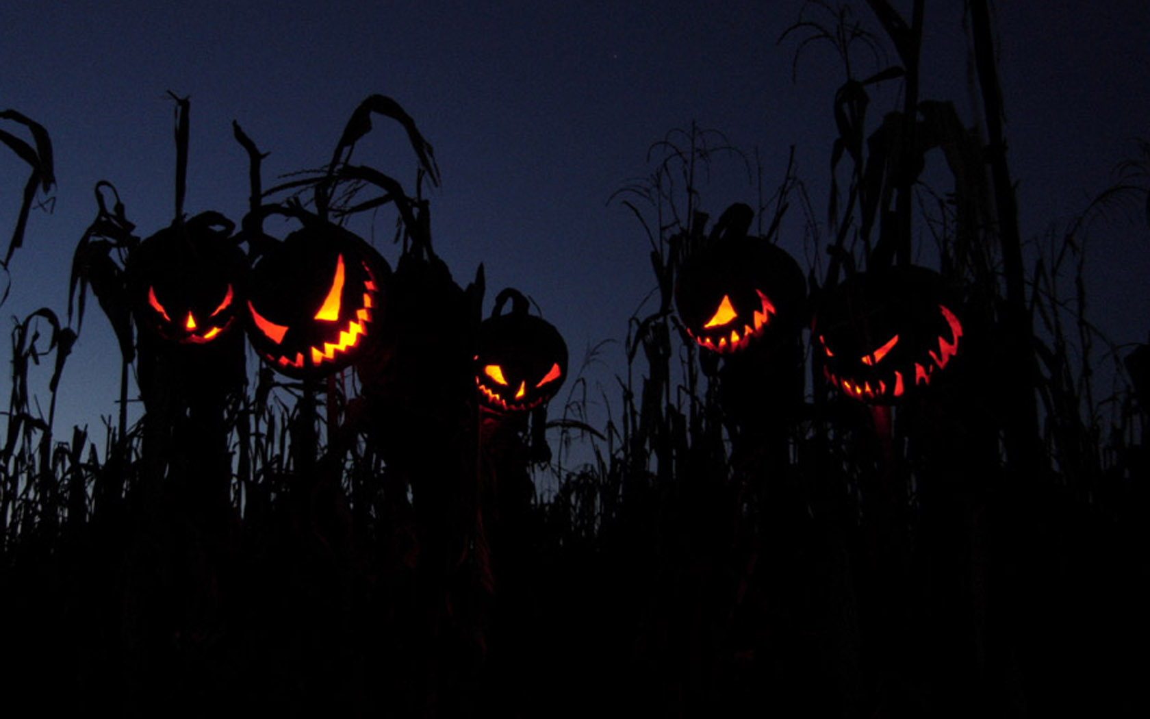 Halloween Wallpaper and Background Image