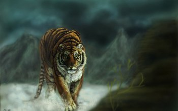 Animal - Tiger Wallpapers and Backgrounds ID : 167474
