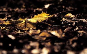 HD Wallpaper | Background Image ID:168664
