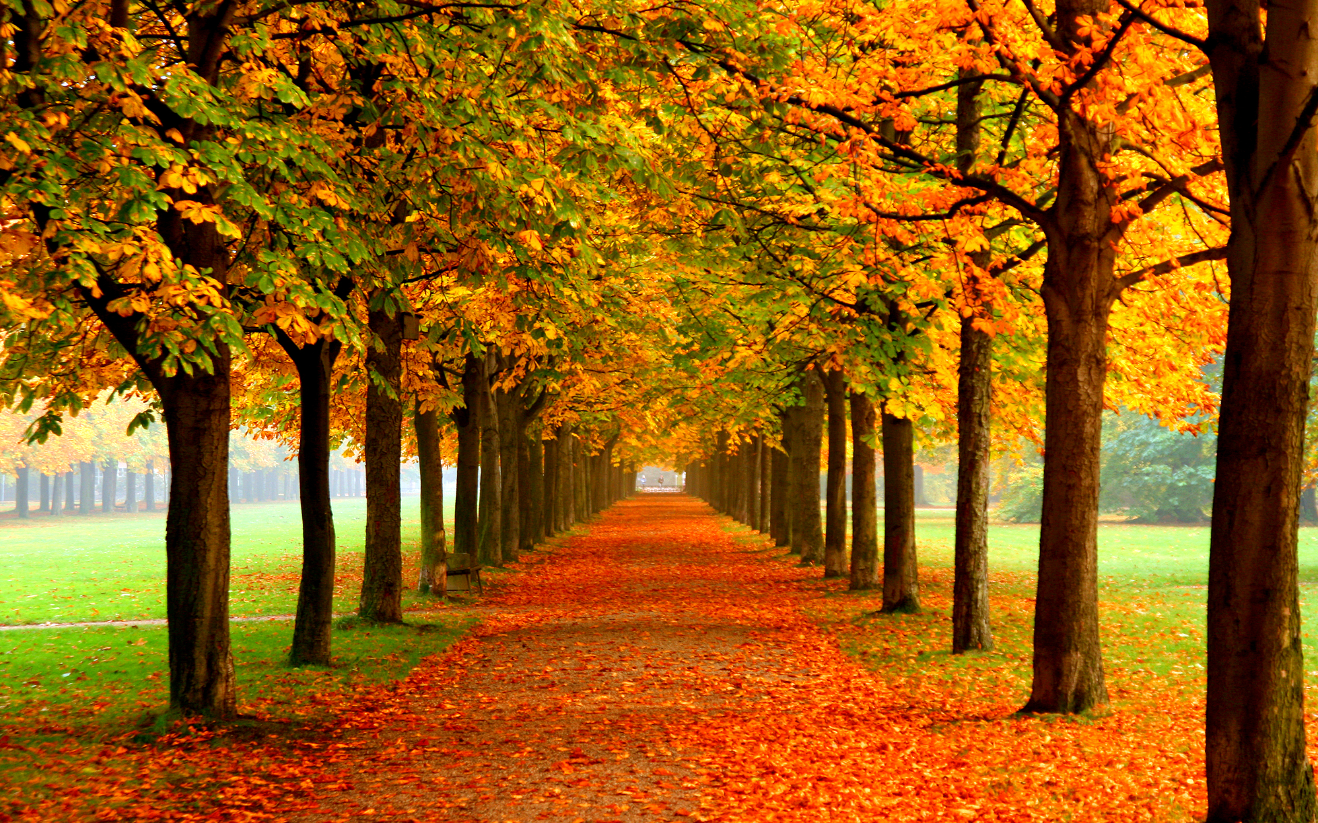 Fall HD Wallpaper | Background Image | 2560x1600 | ID ...