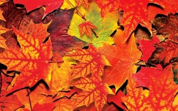 Earth - Autumn Wallpapers and Backgrounds ID : 169836