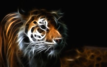 Animal - Tiger Wallpapers and Backgrounds ID : 171606