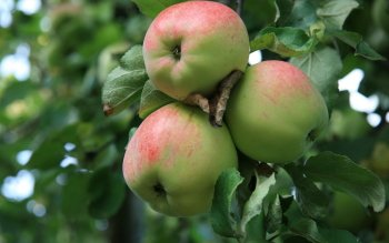Alimento - Apple Wallpapers and Backgrounds ID : 172216