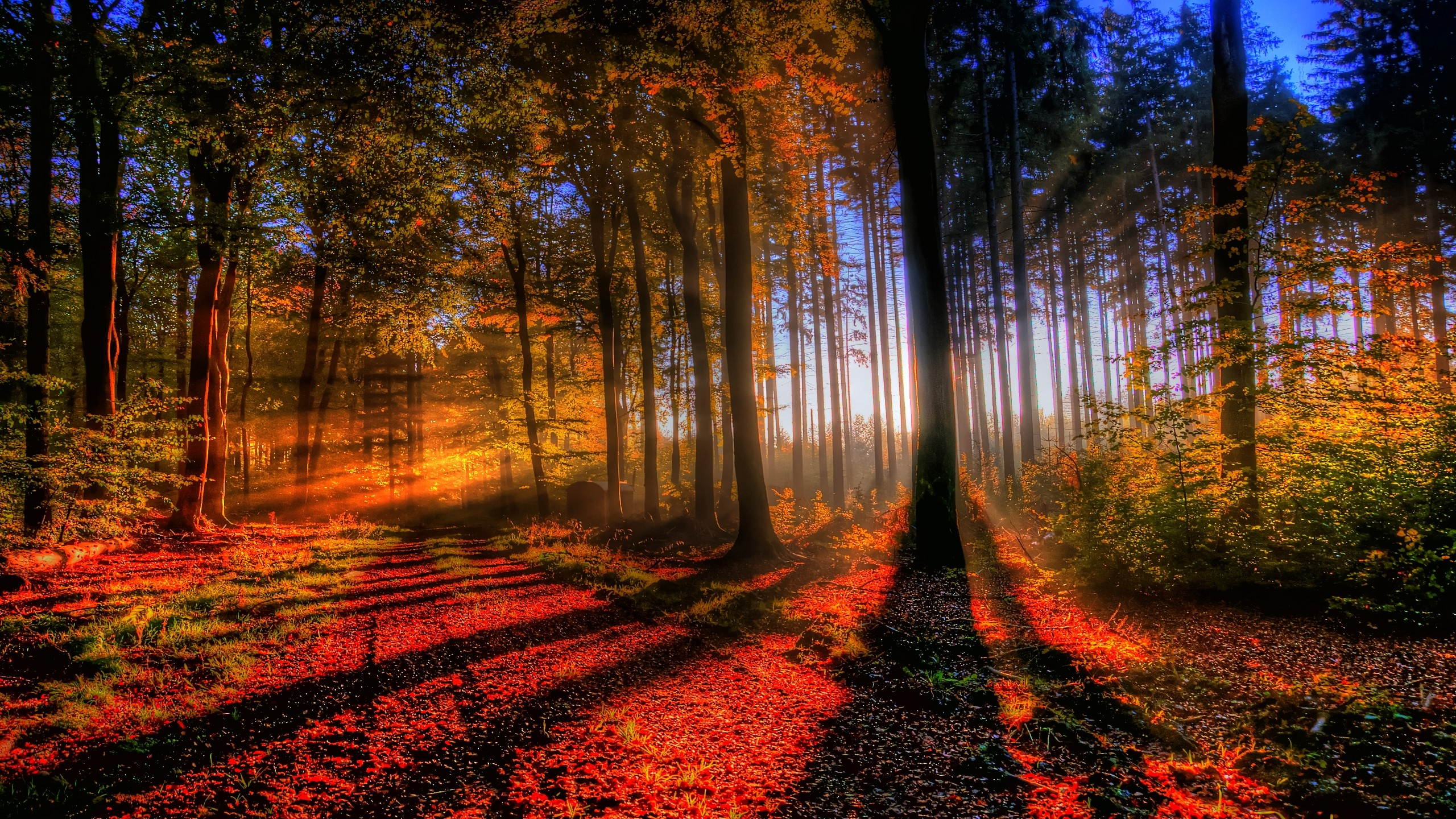 amazing forest wallpaper - photo #9