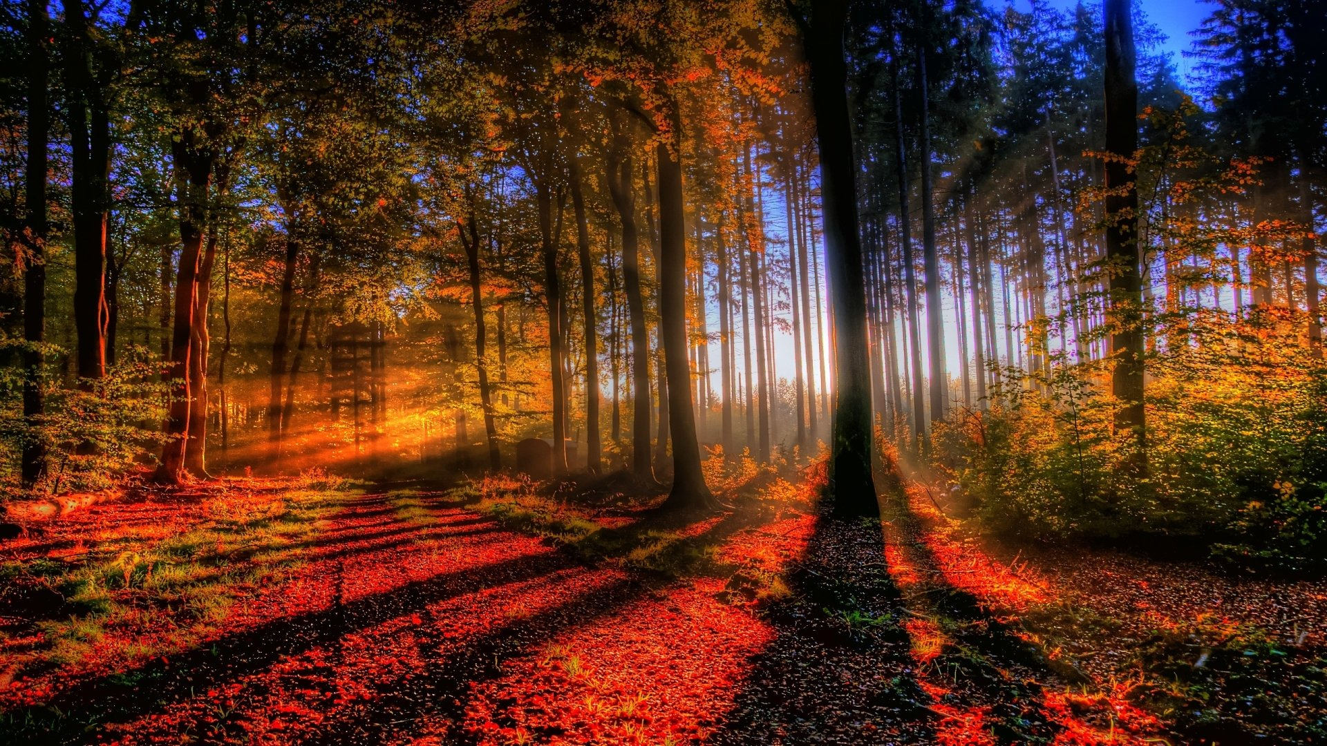 Earth - Forest  Fall Beautiful Nature Tree Leaf Sunbeam Wallpaper