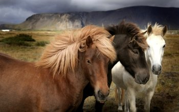 Animal - Horse Wallpapers and Backgrounds ID : 176196