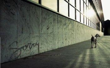 高清壁纸 | 桌面背景 ID:17644