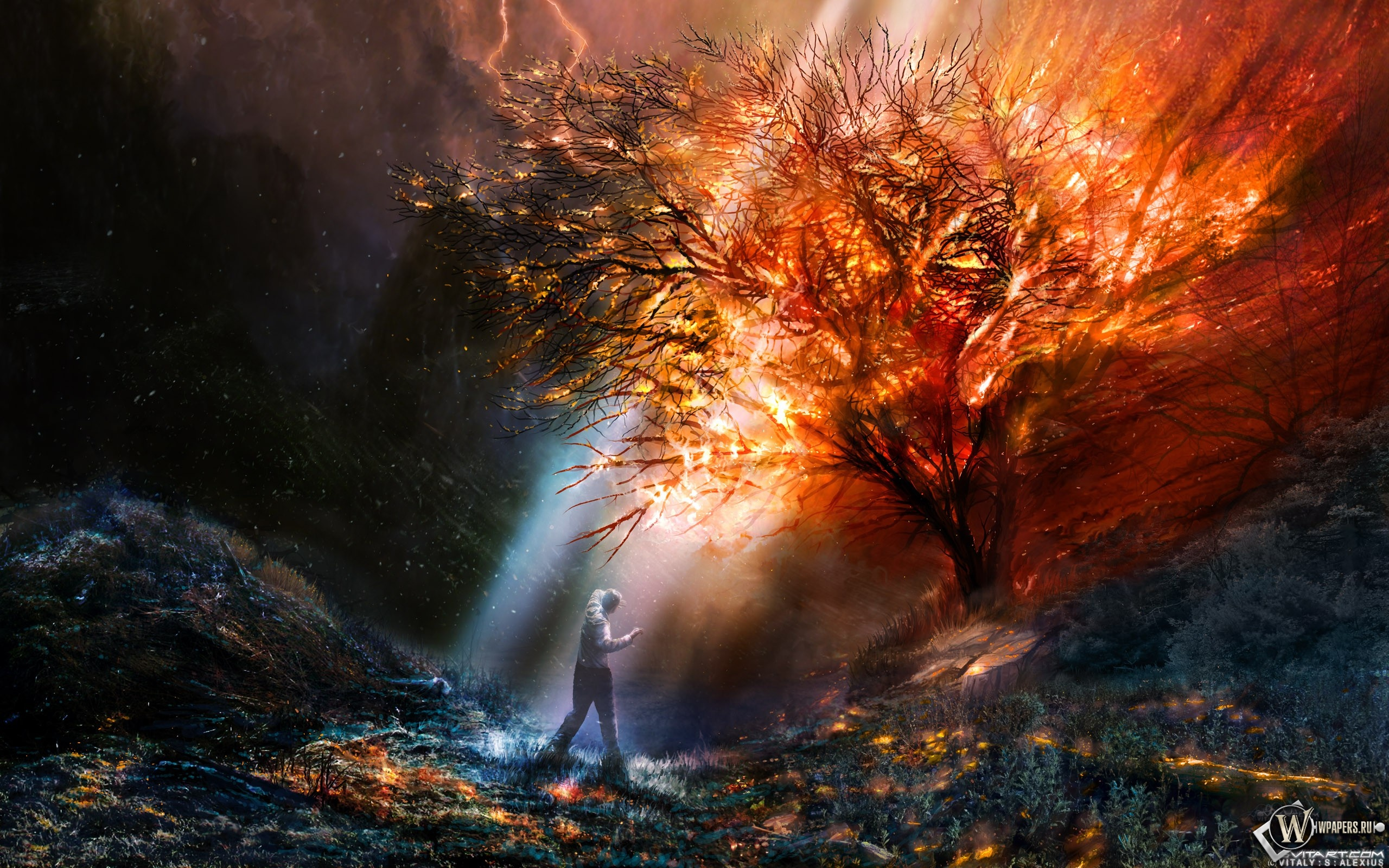 Burning tree Full HD Wallpaper and Background | 2560x1600 ...