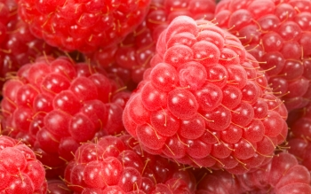 Alimento - Raspberry Wallpapers and Backgrounds ID : 180658