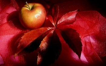 Alimento - Apple Wallpapers and Backgrounds ID : 183956