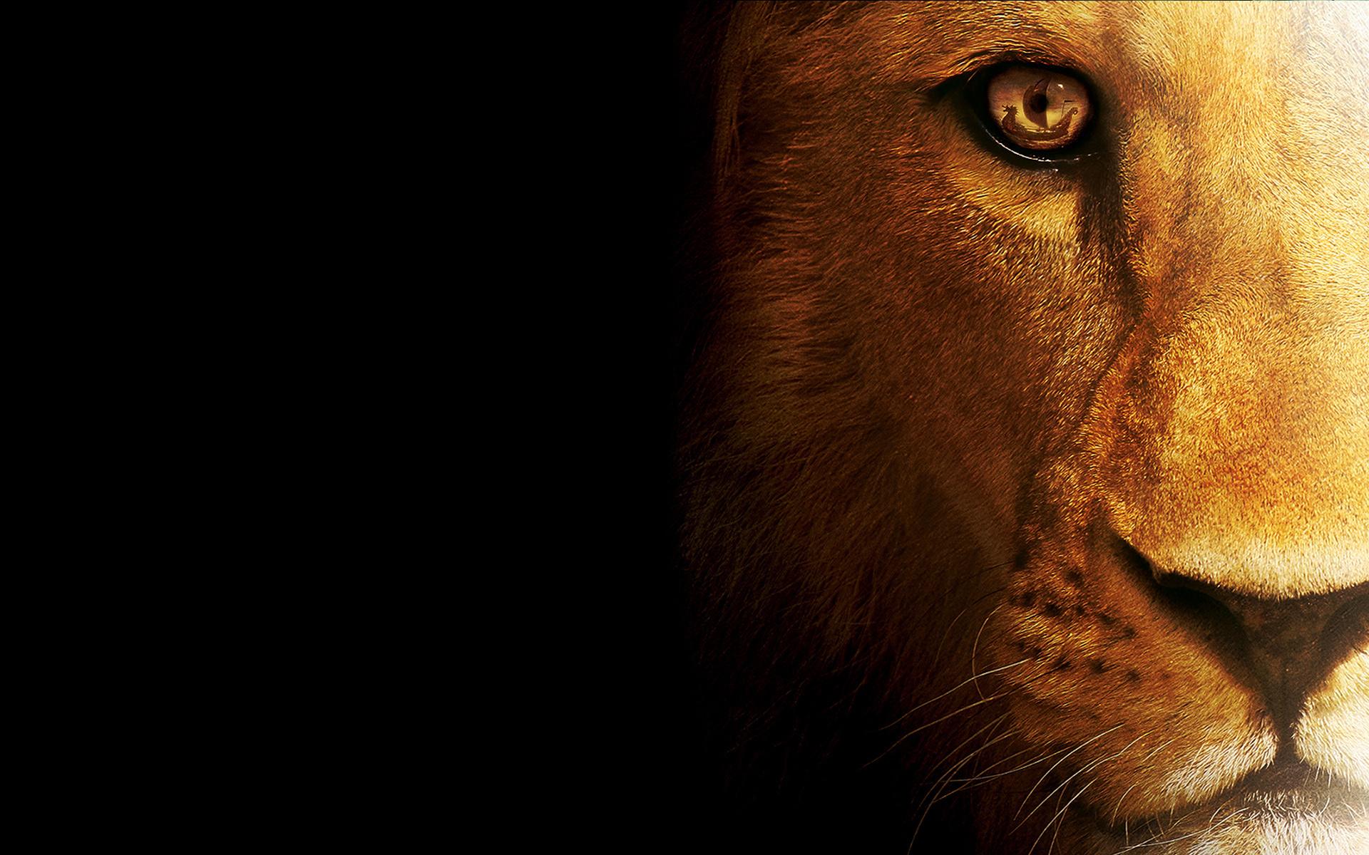 Hd wallpaper lion - Hd Wallpaper Lion 47