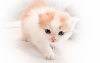 Animal - Cat Wallpapers and Backgrounds ID : 185446