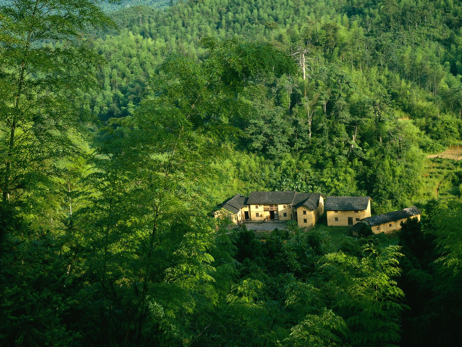 Man Made - House  Tree Green Forest Wallpaper