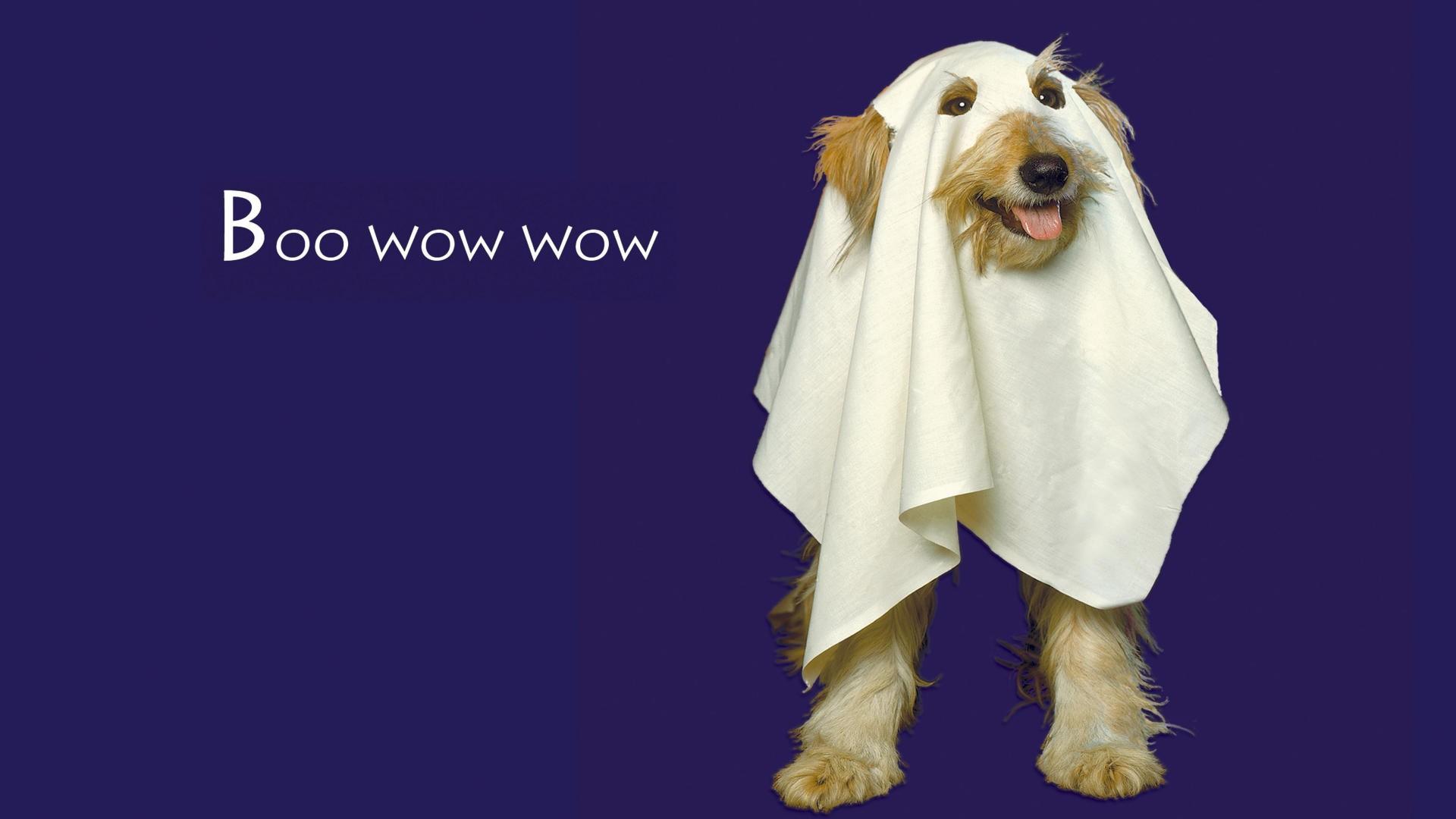 Holiday - Halloween  Dog Wallpaper