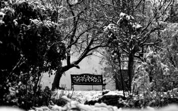 Photography - Black & White Wallpapers and Backgrounds ID : 190086