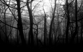 Dark - Forest Wallpapers and Backgrounds ID : 190904