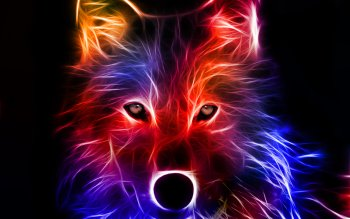 Djur - Wolf Wallpapers and Backgrounds ID : 199794
