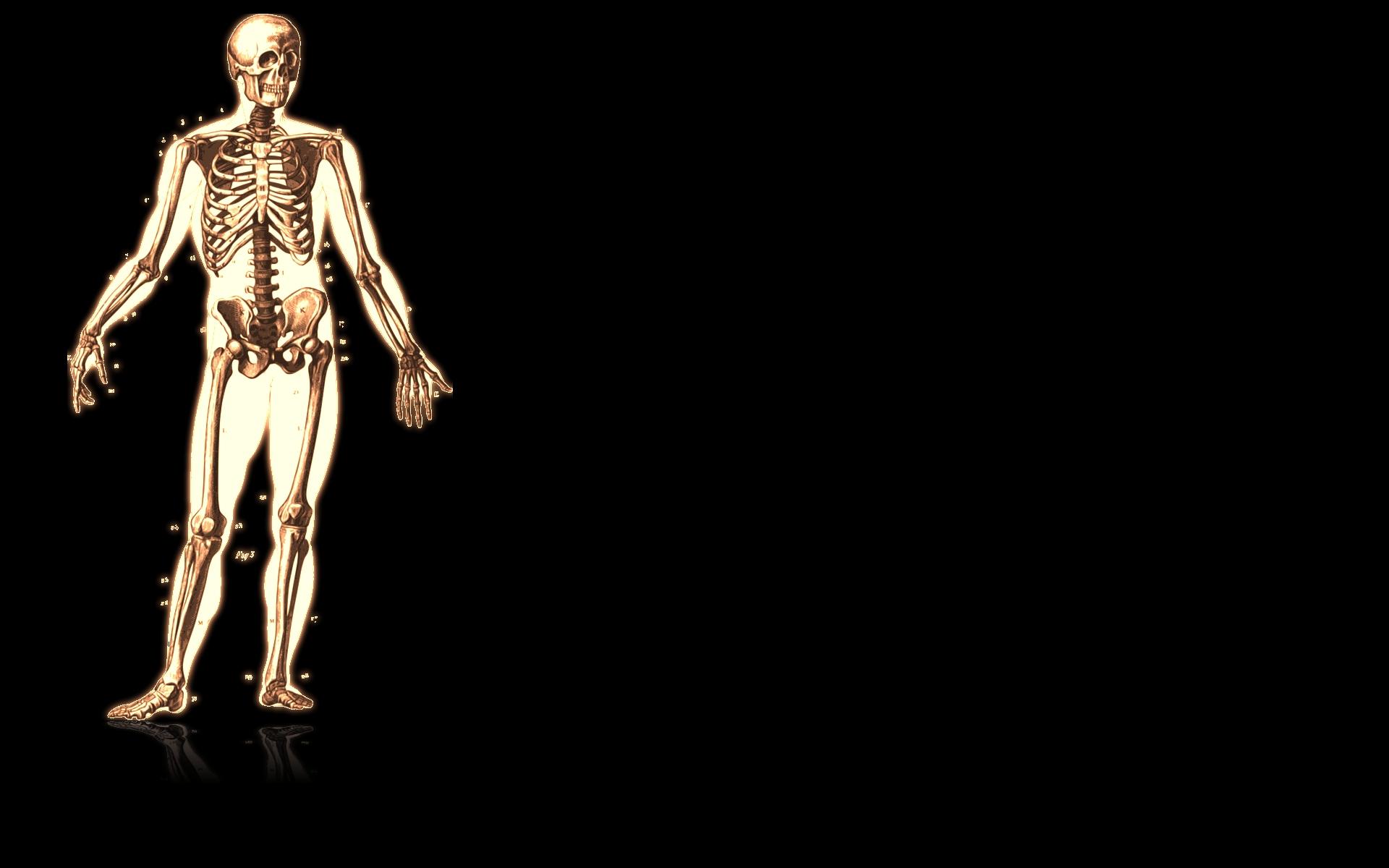 Anatomy HD Wallpaper | Background Image | 1920x1200 | ID ...