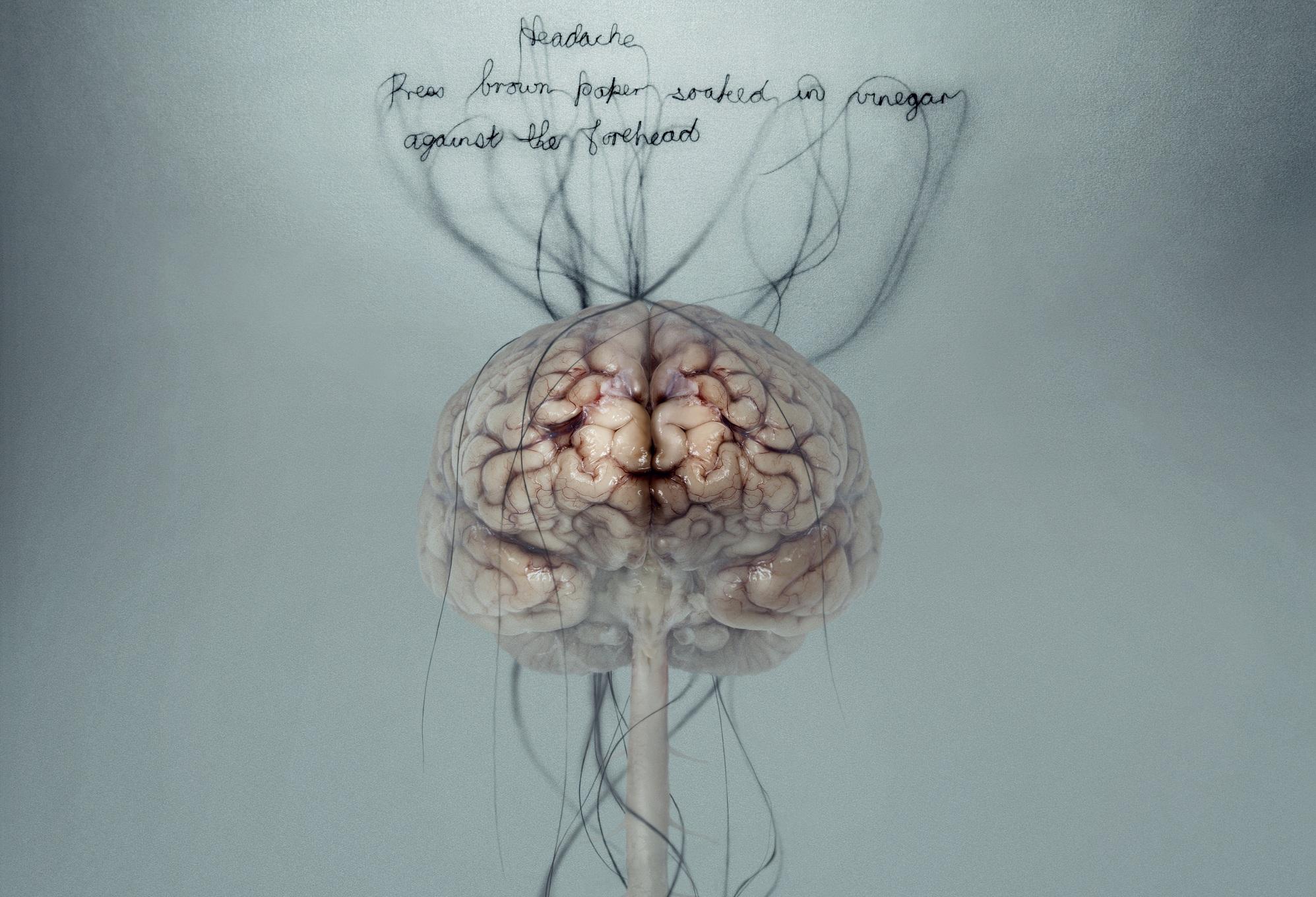 anatomy wallpaper background - photo #28