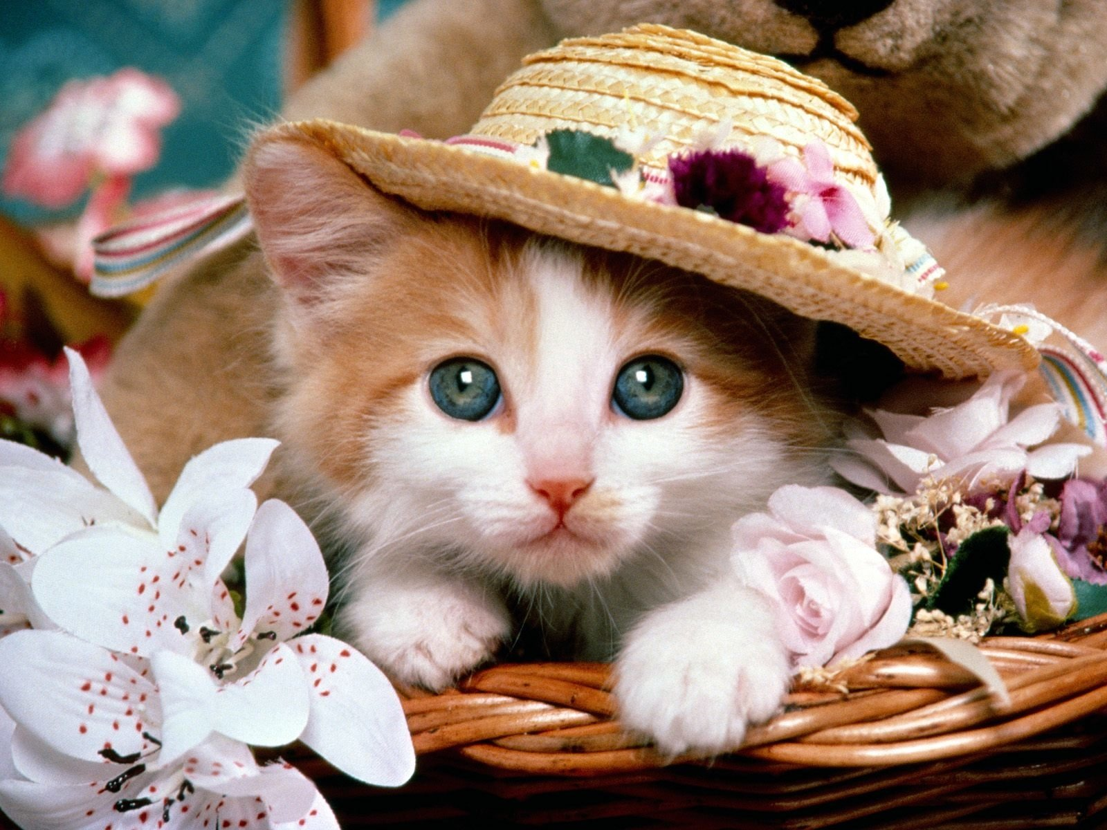Animal - Cat  Animal Kitten Hat Flower Teddy Bear Basket Wallpaper