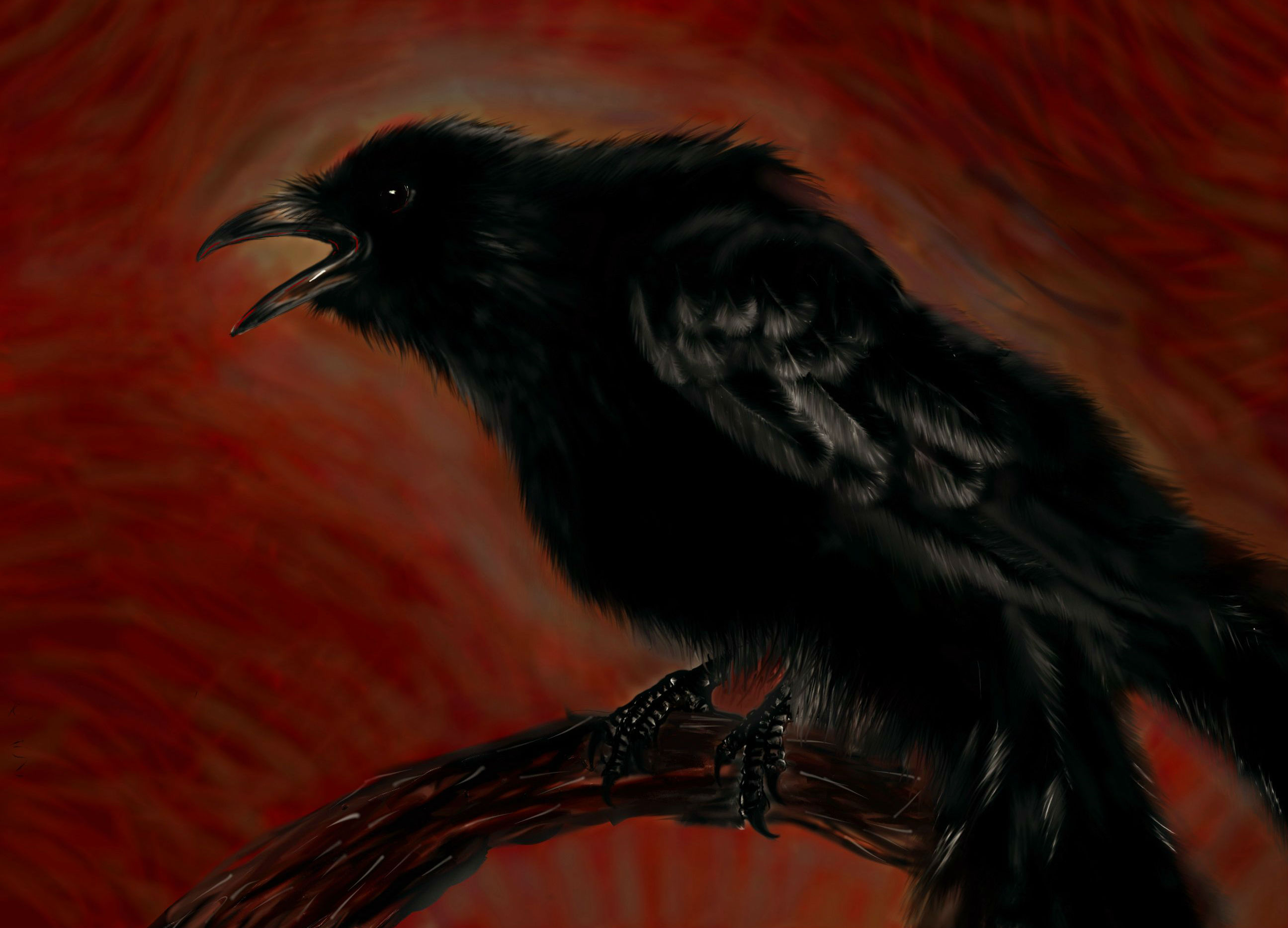 The crow hd wallpaper background image 2591x1868 id - The crow wallpaper ...
