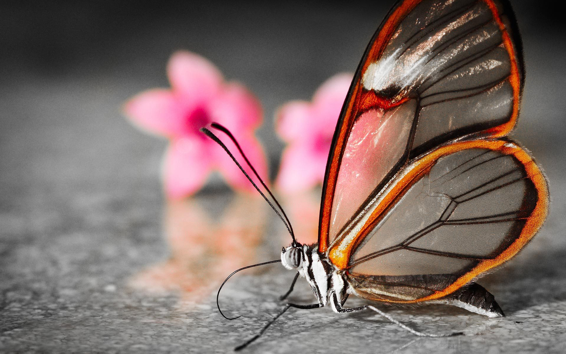 Butterfly Hd Wallpaper Background Image 1920x1200 Id
