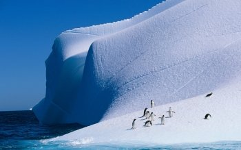Animal - Penguin Wallpapers and Backgrounds ID : 208488