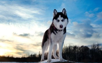 Animal - Dog Wallpapers and Backgrounds ID : 210288