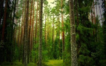 Earth - Forest Wallpapers and Backgrounds ID : 210706