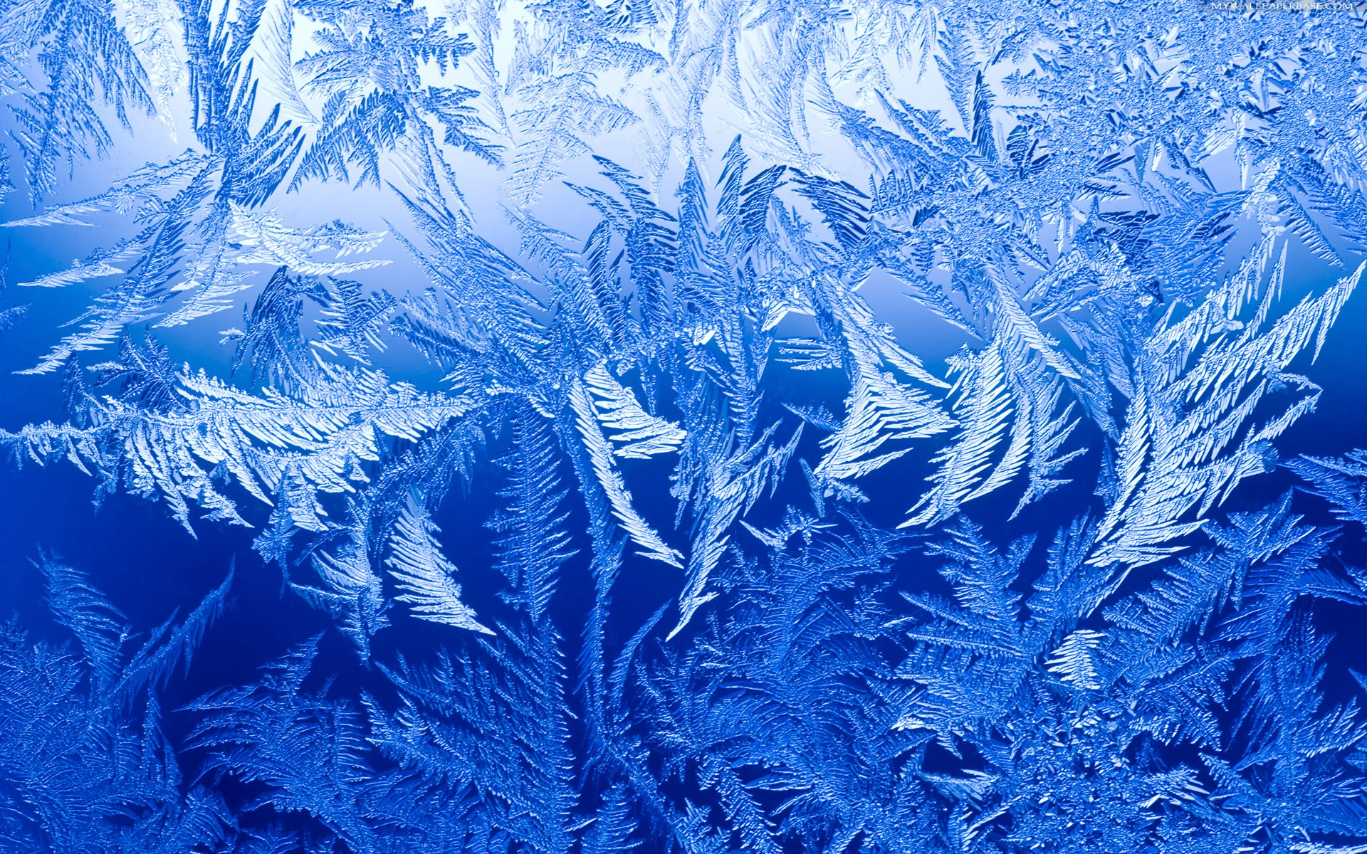 4 Ice HD Wallpapers | Backgrounds - Wallpaper Abyss