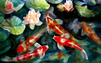 Animal - Koi Wallpapers and Backgrounds ID : 211324