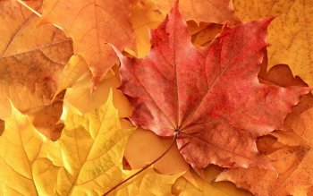 Earth - Leaf Wallpapers and Backgrounds ID : 215716