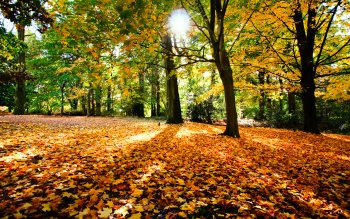 Photography - Autumn Wallpapers and Backgrounds ID : 218324