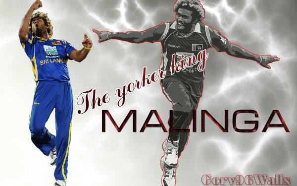 Sport Cricket HD Wallpaper | Background Image