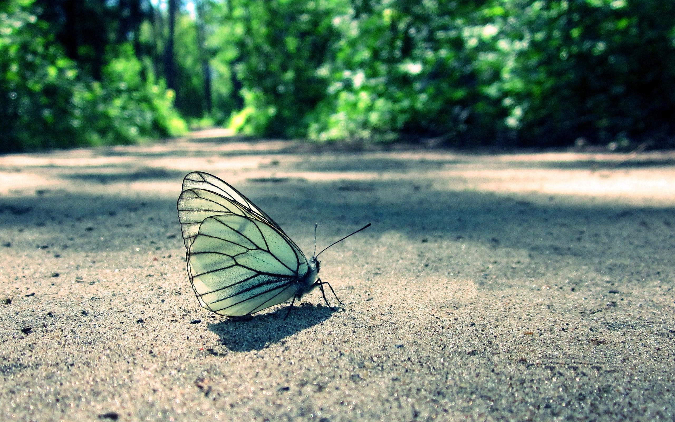 Mariposa Fondo De Pantalla Hd Fondo De Escritorio