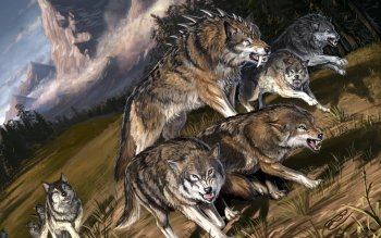 Animal - Wolf Wallpapers and Backgrounds ID : 224578