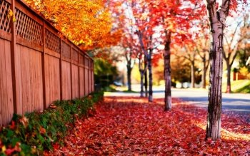 Photography - Autumn Wallpapers and Backgrounds ID : 224676