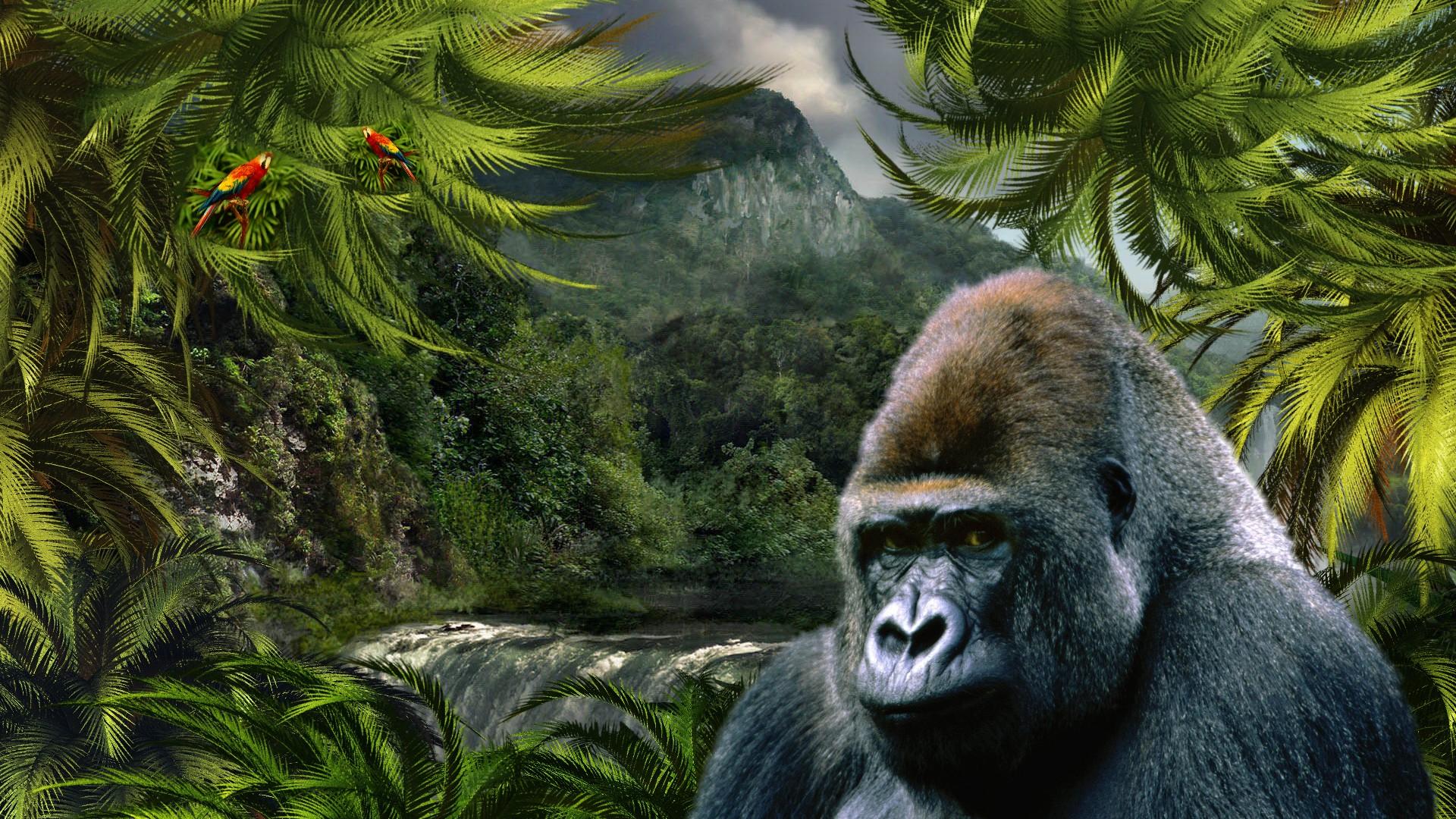 ジャングルの中のゴリラ