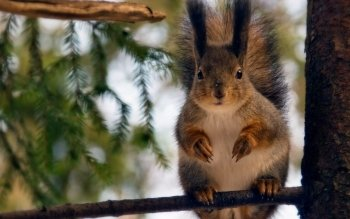 Animal - Squirrel Wallpapers and Backgrounds ID : 225186
